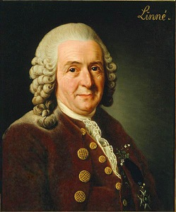Carolus Linneaus